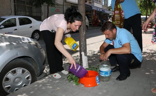 Eyüp Belediyesi sokak hayvanları için su kabı dağıttı!