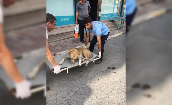 Arabanın çarptığı köpek tedavi altına alındı