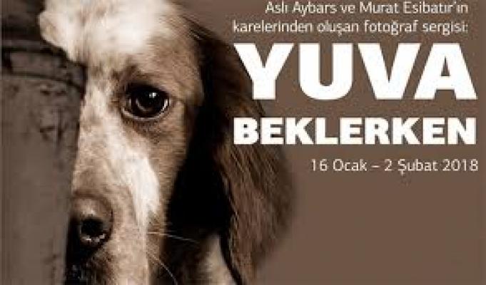"""FMV Galeri Işık'taki """"Yuva Beklerken"""" sergisi, terkedilmiş hayvanlara umut olacak"""