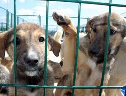 Kartal'dan sokak hayvanlarına dost eli
