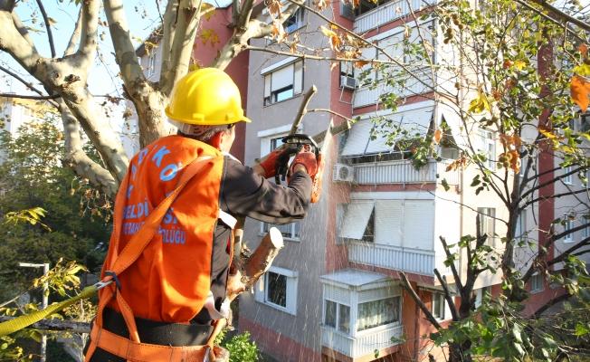 Kadıköy Belediyesi'nin Ağaç Budama Çalışmaları Devam Ediyor