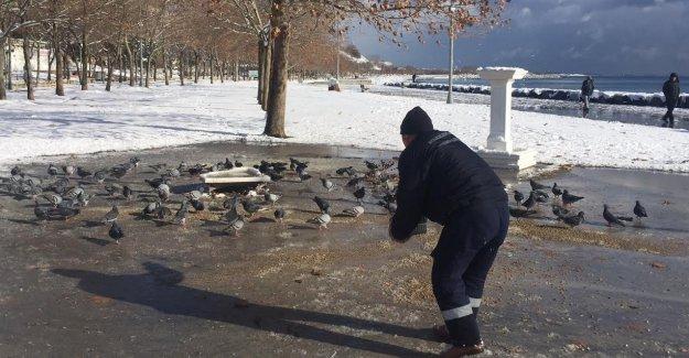 Avcılar Belediyesi Soğuk Havada Sokak Hayvanlarını Unutmadı