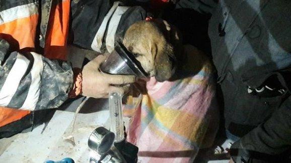 Beykoz'da kuyuya düşen yavru köpek 10 gün sonra kurtarıldı
