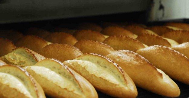 Ekmekte büyük tehlike: GDO'lu çıktı
