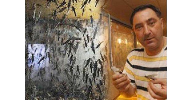Hamam Böceği, Çekirge, Kurtçuk Üretip Satıyorlar