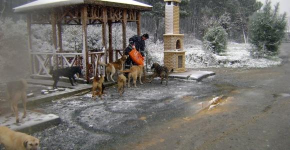 İBB sokak hayvanlarını unutmadı