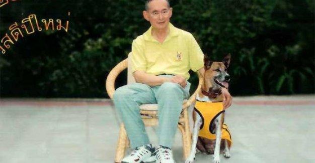 Köpeğe hakaret etti, 37 yıl hapisle yargılanıyor!
