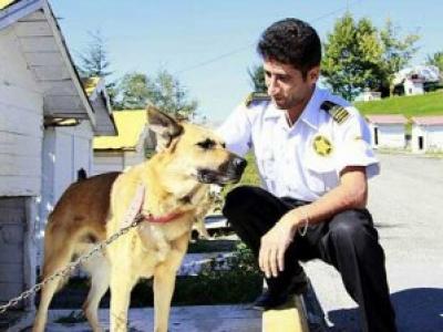 Köpeği 'Ev'lendirip Sahibini Eğitiyorlar