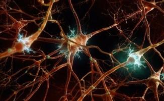 Beyindeki kusurlu yardımcı hücrelerin şizofreniye sebep olduğu bulundu