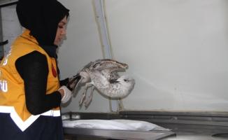 Eyüpsultan Belediyesinde hayvanlara yönelik bakım ve tedavi çalışmaları devam ediyor.