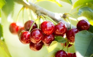Türkiye'nin meyve sebze ve mamulleri ihracatı 8 ayda 2.4 milyar dolara tırmandı