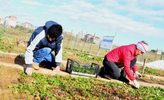 Beylikdüzü Belediyesi Gıda Bankası gıda desteği sağlamak için işbirliği yapıyor