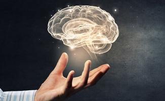 Bilim insanları domuz beyni üzerinden keşfetti: Alzheimer'a çare olabilir