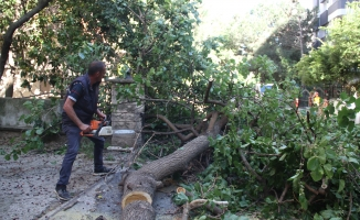 Kartal Belediyesi Ekiplerinden Devrilen Ağaçlara Müdahele