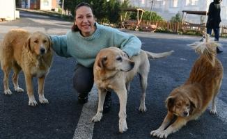 Beylikdüzü Hayvan Bakımevi'ne 500 Kilo Mama Bağışı