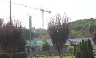 Güzelim Çam Ağaçları Kesilip Yerine Plaza Yapıldı