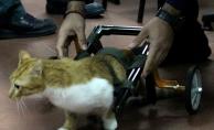 Araba çarpan felçli kediye Robot Takımı'ndan yürüteç