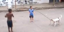 Köpek salladı çocuklar ip atladı