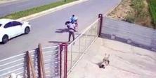 Pompalıyla köpeği vuranın cezası belli oldu!