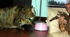 Bu da obez kedi!