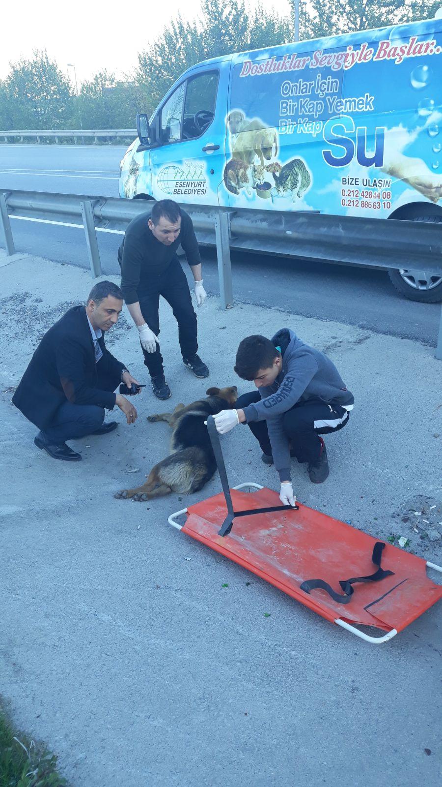 Esenyurt Belediyesi'nden yaralı köpeğe şefkat eli