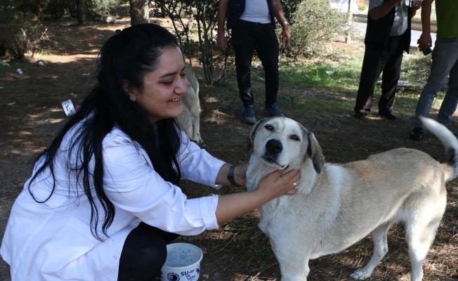 Kartal Belediyesi'nden 4 Ekim'de Sokak Hayvanlarına Mama Desteği