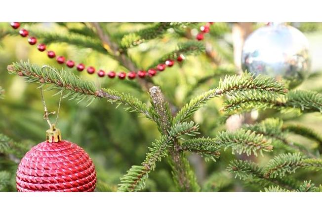 Hem Yeni Yıl Ağacınız Hem İstanbul'da Dikili Bir Ağacınız Olsun!