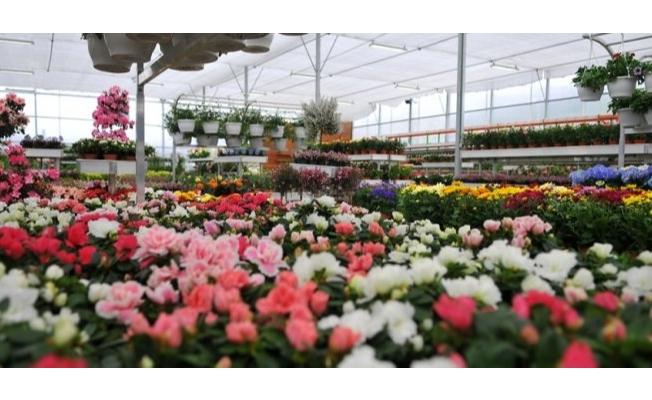 İBB, Yerli Çiçek Üreticileri İle Buluşuyor