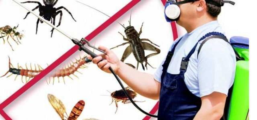 Ataşehir Böcek İlaçlama Hizmeti