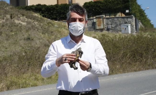 Kaplumbağa Belediye Başkanının Yolunu Kesti ..