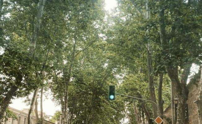 Çırağan Ve Dolmabahçe Caddelerindeki Sağlıksız Ağaçlar Yenileniyor
