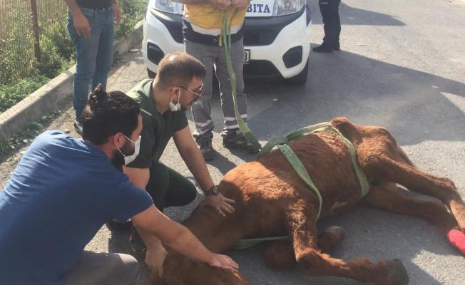 Terk Edilen Yaralı Hayvana Esenyurt  Belediyesi Sahip Çıktı