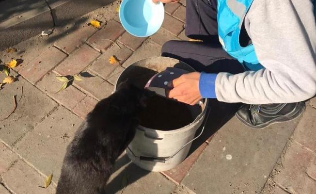 Avcılar Belediyesi Karantina Günlerinde Sokak Hayvanlarının Yanında