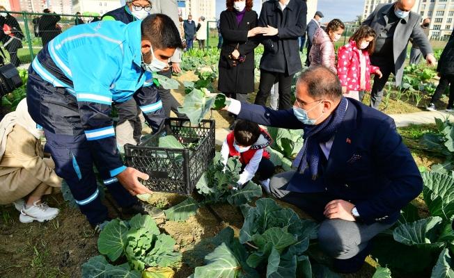 Küçük Bahçıvanlar Parkında İlk Hasat Yapıldı