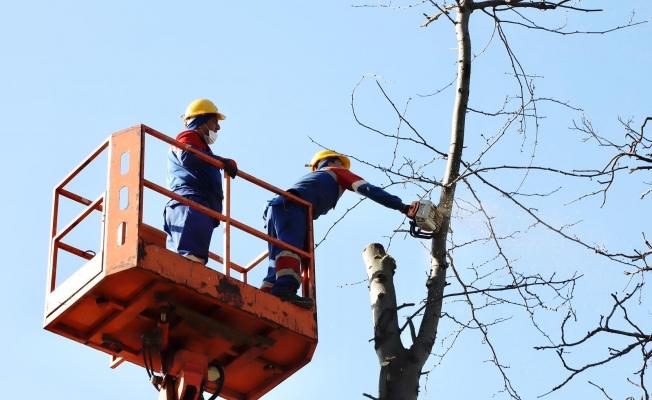 Ekipler Ağaçların Sağlığı İçin Sahada