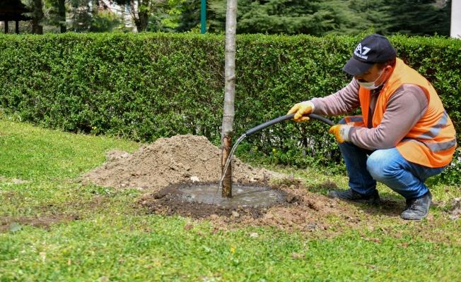 Esenyurt Belediyesi Kesilmek Zorunda Olan Ağaçların Yerine Yeni Ağaçlar Dikti