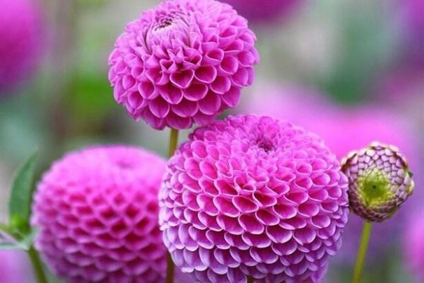 Kurumayan Bahçe Çiçekleri
