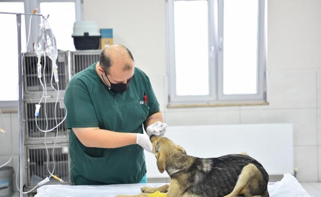 Avcılar Belediyesi Ekipleri, Zehirlenen Yavru Köpekleri Hayata Döndürdü
