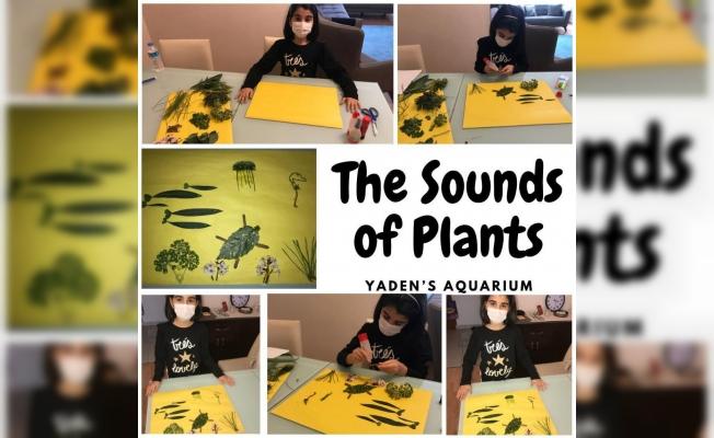 The Sound Of Plants (Bitkilerin Sesi) eTwinning Projesi