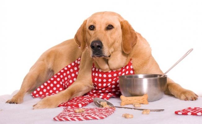 Köpek Maması (Konserve, Ödül ve Kemikleri) Alırken Dikkat Edilmesi Gerekenler