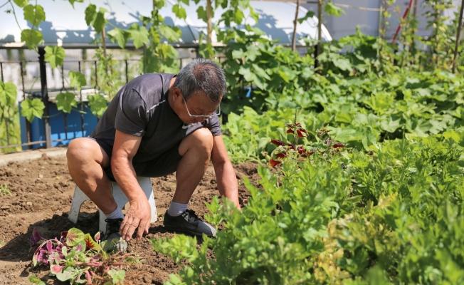 Küçükçekmece'den Şehrin Ortasında Organik Tarım Fırsatı