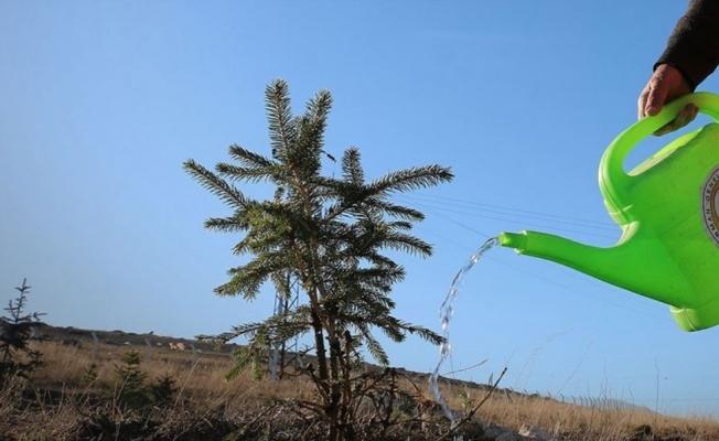 Orman Genel Müdürü Karacabey Yangınlara İlişkin Açıklama'da Bulundu