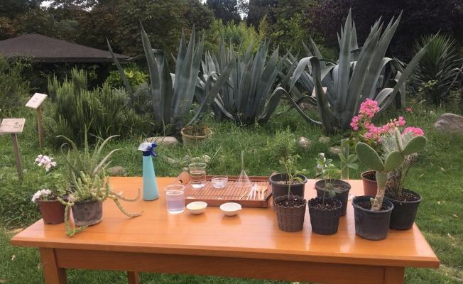 Salgın Döneminde Balkon Bahçeciliğine Olan İlgi Arttı