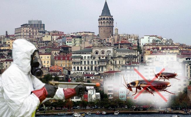 İstanbul'da Güvenilir Böcek İlaçlatma Firması