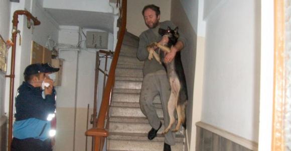 Apartman dairesinden 23 köpek çıktı