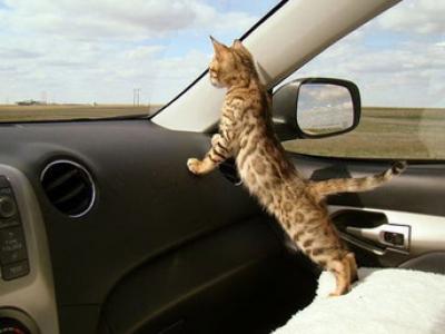 Kedi navigasyonu