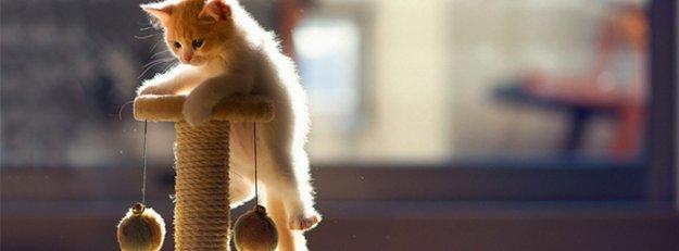 Kediniz sizi aslında o kadar da umursamıyor!