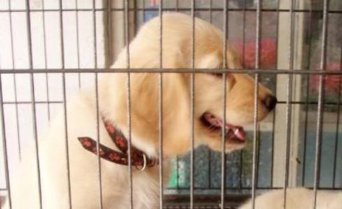 Pet-shoplarda hayvan satışı yasağı başladı