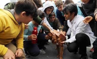Hayvan Barınma ve Müşahede Merkezi'ne ziyaretçi akını