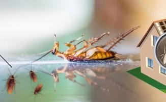 İstanbul İlçeleri Böcek İlaçlama
